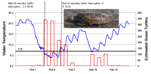 Graph of green turtle count.